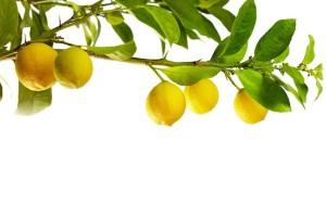 shutterstock_92262802-3 lemon branch zonder tekst